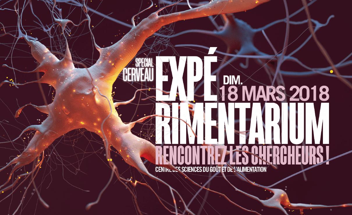 experimentarium cerveau
