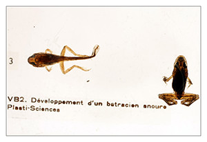 MCS-collection zoologie 02