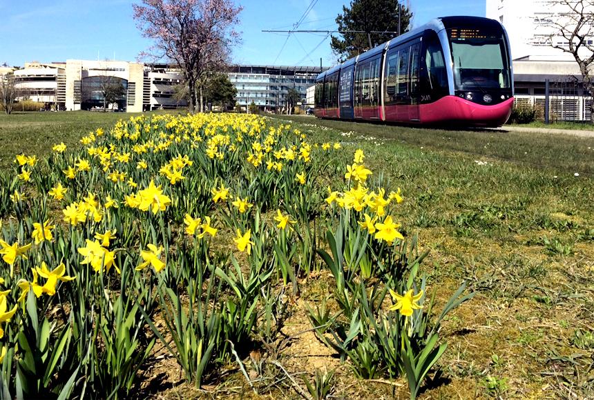 C'est le printemps à l'uB !